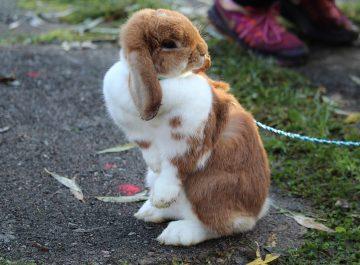 Två dagar med trettio kaniner featured image